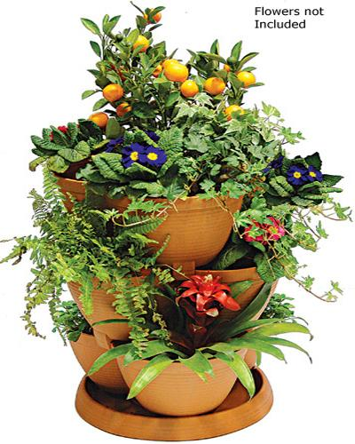 BULK ORDER OF 30 MEDIUM SIZED POTS & 15 TRAYS IN TERRACOTTA (Flowers not included)